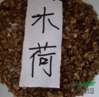 供应木荷种子、木荷种子价格