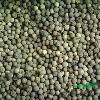2013新鲜香樟种子 保证发芽率 预购从速