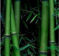 青皮竹、翠竹、早园竹、毛竹、四季竹