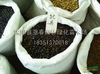 荷包牡丹种子,荷包牡丹种苗,别称: 荷包花、铃儿草、兔儿牡丹