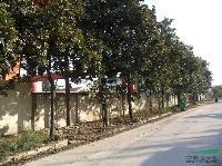 夏娟.千头柏.沙玉兰.玉兰树.新疆杨等3000品种