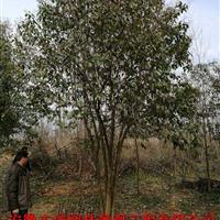 安徽肥西有:丛生女贞 丝棉木 朴树 桕 黄连木 榆树
