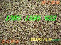 姜氏花木场正在热销狗牙根三叶草黑麦草苏丹草玉米草苜蓿草种子