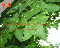 枫香,红叶石楠,杜梨(棠梨)腊梅,桑树、麻栎,檀树、榆树