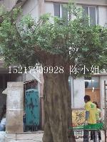仿真大榕树