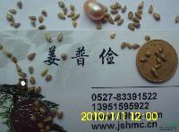 高丹草高产皇竹草苏丹草玉米草苜蓿草狼尾草黑麦草种子价格包邮