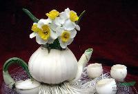 福建水仙花:头径5-20公分,盆栽,盆景,自产自销
