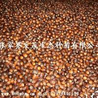 供应青冈栎种子、红�怪肿印⒑�南省张家界地区鑫成君泰