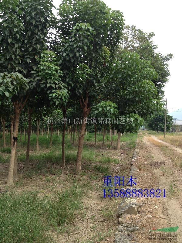 杭州禾抱园林科技有限公司