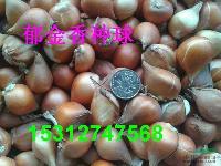 优质郁金香种球百合花种球风信子种球朱顶红种球牡丹花玫瑰花月季