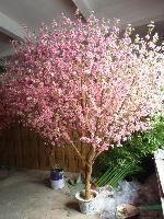 芙蓉花、木芙蓉、茉莉花、樱花、移栽樱花、蓝天竹、月季花、银杏
