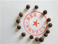 香樟种子 九江种子批发 批发大量香樟种子 大叶樟种子