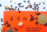 皇竹草苏丹草高丹草甜高粱玉米草土生土长高粱种子价格低还能包邮