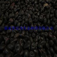 油麻藤种子,常春油麻藤种子,垂直绿化油麻藤