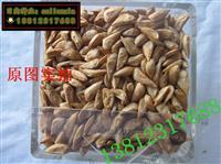 2013新采印度雪松种子 雪松籽 宝塔松 香柏种子 品种正宗