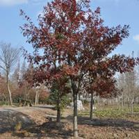 纳塔栎图片14