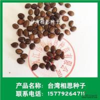 江西台湾相思种子介绍