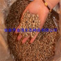 张家界宏茂生态种苗有限责任公司供应滇润楠种子