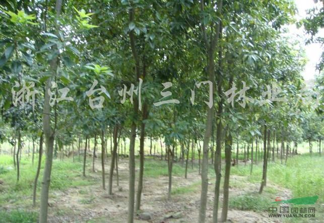三门县林特综合服务站种苗繁育基地
