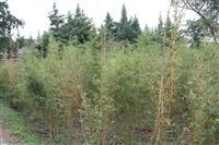 成都基地大量出售琴丝竹