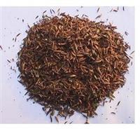 供应进口景观林木种子,史密斯桉种子 桉树种子(进口)
