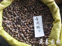 江苏青冈栎种子,青冈栎,别名:青冈树,紫心木 、青栲