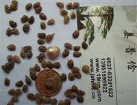 哪里有红豆草种子价格紫云英籽粒苋紫花苕子紫花苜蓿多少钱一斤