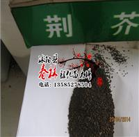 荆芥种子 中药材种子 蓝花荆荠、线荠、四棱杆蒿、假苏 种子