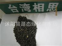 出售当年新采的花卉种子 新品种 台湾相思豆种子 相思树种子