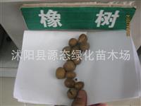 优质橡树种子 橡树种子 橡树苗种子 栎属种子 栎树种子 柞树