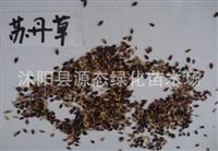 牧草种子 苏丹草种子 牲口养殖饲草*选 优质高产 包发芽率