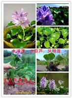 水浮莲,水葫芦、荇菜,水鳖、水罂粟,大薸,大浮萍,睡莲