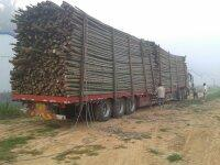 长期供应4到12寸及以上毛竹、菜架竹、桂竹,竹片,竹尾等