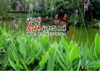 供应水生植物-再力花 又名水莲蕉 塔利亚 水竹芋 水莲蕉 水景绿化