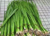 德國鳶尾、花菖蒲、香蒲、蘆葦、水蔥、水菖蒲、睡蓮