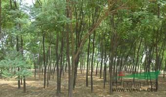 平陆县滨河农林开发有限公司