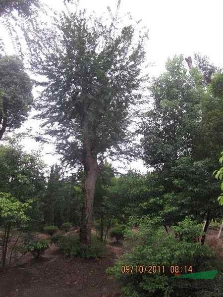 沭阳县奔腾绿化苗木园艺场