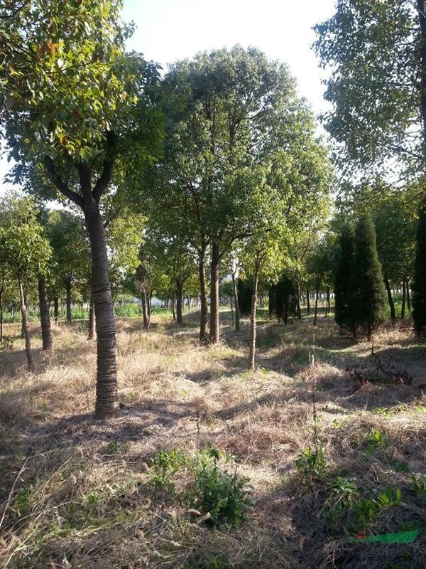 上海浦东新区园中园林绿化有限公司
