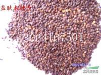 盐肤木种子供应/盐肤木种子图片