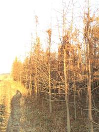 供应2公分池杉.3公分池杉.4公分池杉.5公分池杉