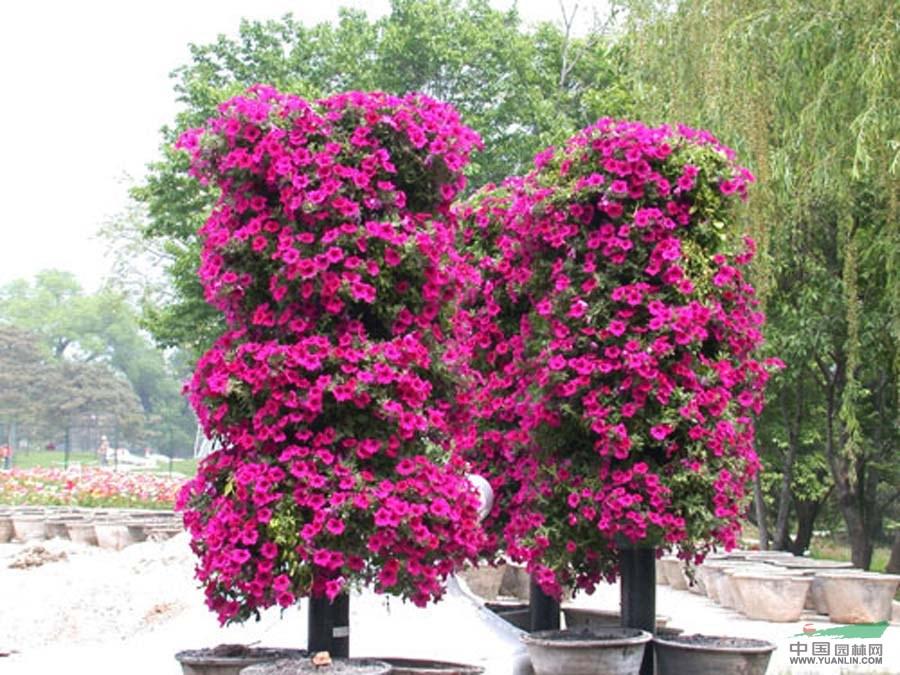 山东立体花坛造型,立体花墙造型,草花租摆造型,花球花柱花塔