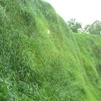 批发红三叶草种马蹄金草种紫花苜蓿草种边坡防护草种