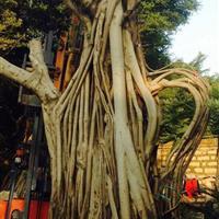 榕树造型图片展示