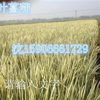 杭州萧山大量供应水葫芦500万棵