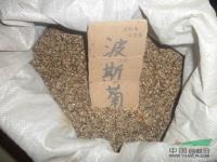江苏波斯菊种子