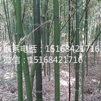 浙江地区大量供应竹子、刚竹、紫竹、早园竹、早竹、淡竹、红竹