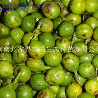 宏茂生态供应柏木、竹柏、南酸枣、栾木种子