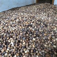 南酸枣种供应、嫁接枣用的砧木  湖南省永定区