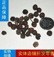 江苏精选花木种子 光皮树种子 光皮树苗木种子 光皮树可加工柴油