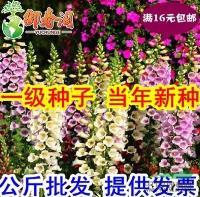 江苏多年生草本植物种子 毛地黄种子混色 洋地黄种子 金钟花卉种子信息